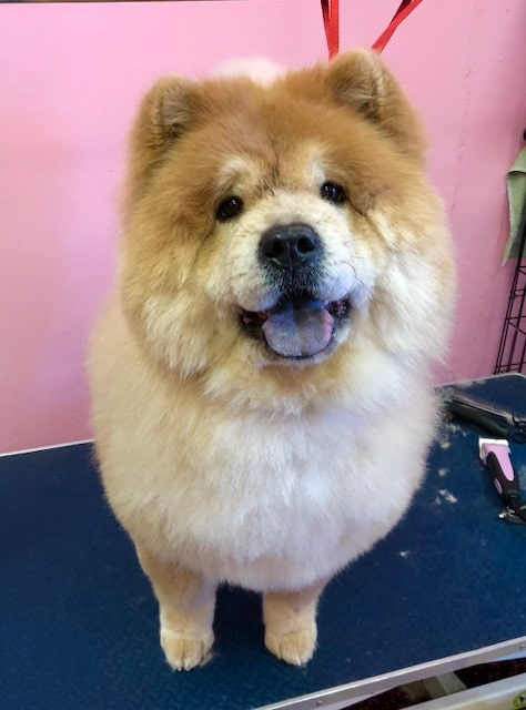 fluffy dog after a Las Vegas pet grooming treatment
