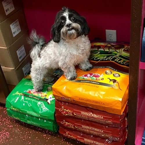 Little dog standing on bags of Pet Food