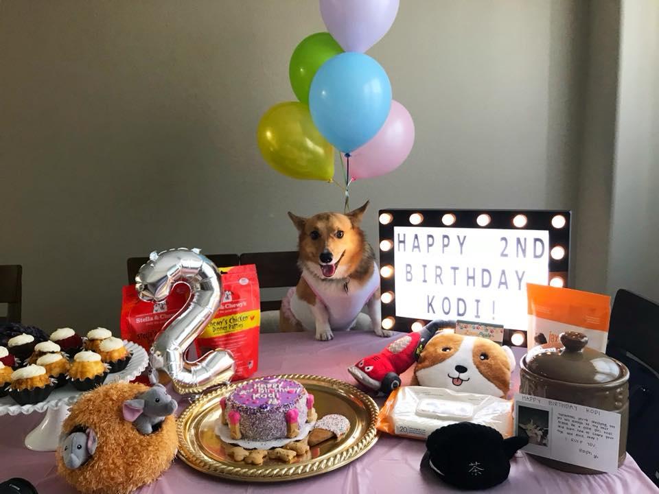 Kodi the dog with pet treats