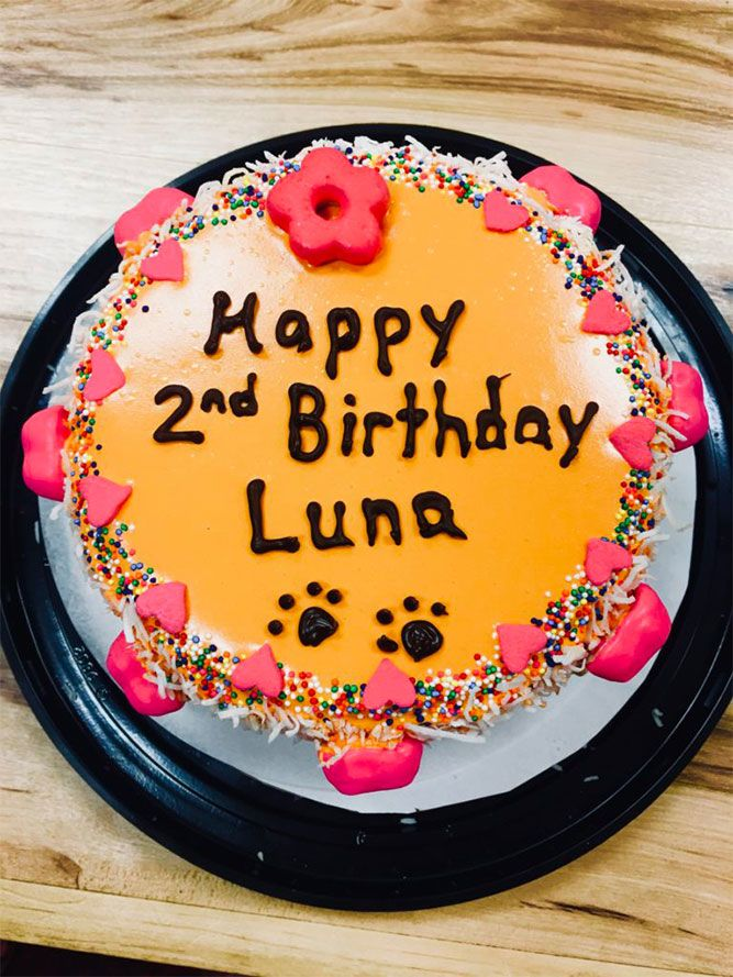 Woof Gang Bakery & Grooming Las Vegas Happy second birthday Luna. Orange cake with pink hearts and colorful sprinkles