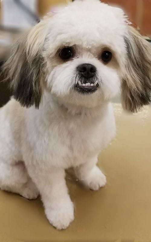 dog after a pet grooming service 2