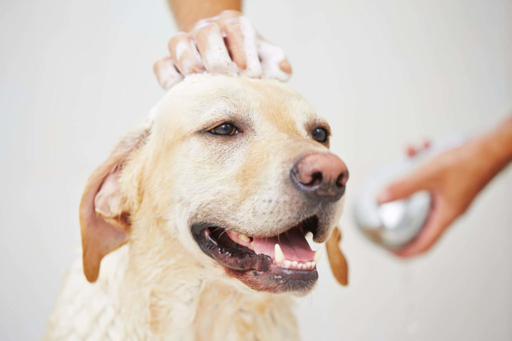 dog being cleaned